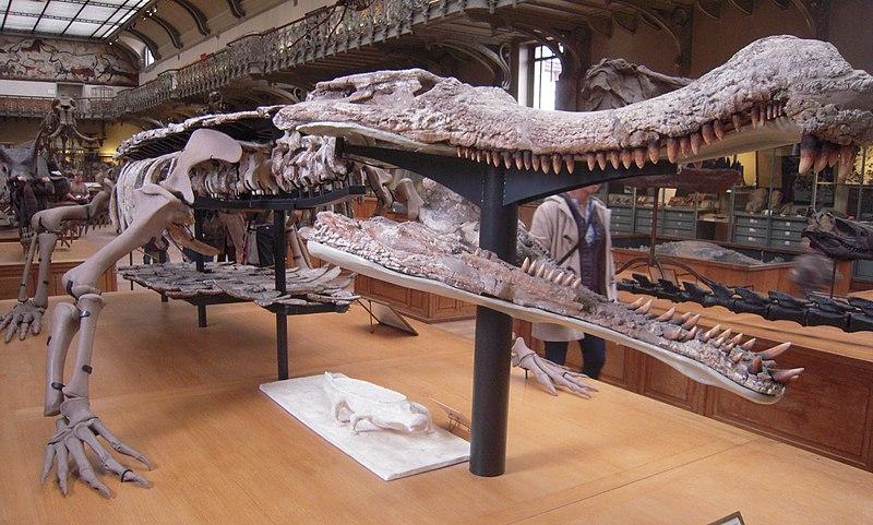 Urzeit-Quiz 800px-Sarcosuchus_Paris_%281%29