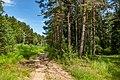 Sciklieva reserve (Belarus, June 2020) 07.jpg