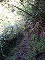 Sentier du Bras Patience - panoramio.jpg