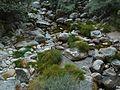 Serra da Estrela (22499438496).jpg
