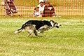 Sheep Dog Display (2621007601).jpg