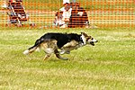 Sheep Dog Display (2621007601).jpg