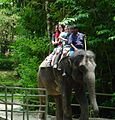 Singapore elephant riding in zoo 2002.jpg