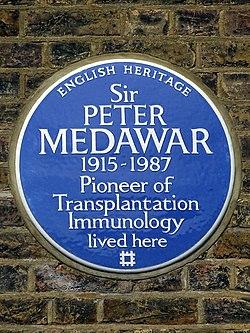 Sir peter medawar 1915   1987 pioneer of transplantation immunology lived here