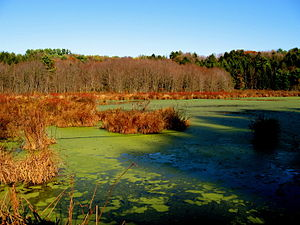 Frances Slocum State Park - Swampland in the park in autumn