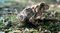 Small toad, interesting markings (6083966795).png