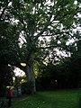 Smarmore, Co. Louth, Ireland - panoramio (14).jpg