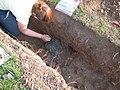 Snodland hoard being excavated..jpg
