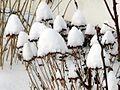Snow caps! (4256884247).jpg
