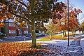Snow in Autumn, London N14 - geograph.org.uk - 1028837.jpg