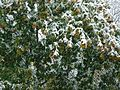 Snowstorm New Jersey October 2011 Number 9.jpg