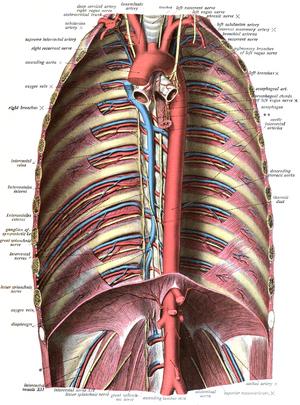 Description de l'image Sobo 1909 538.png.