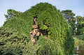 Sophora japonica 'pendula' - Jardin de Bagatelle.jpg
