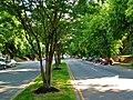 South Boulevard (2475895891).jpg