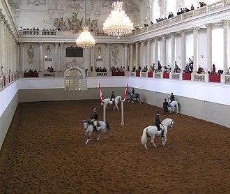 Lipizzan - Lipizzans training at the Spanish Riding School