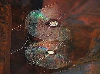 Spider web - Spiral orb webs in Karijini, Western Australia