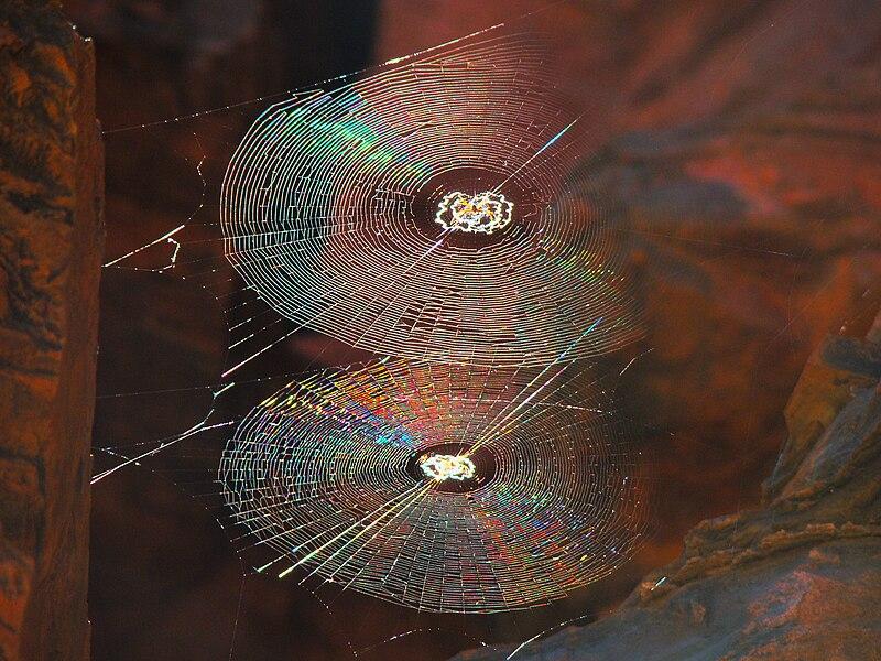 File:Spiral Orb Webs.jpg