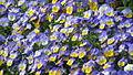 Spring in Hyde Park - London (3724784506).jpg