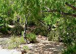 Springs Preserve garden path.jpg