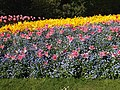 St James Park Flowers.jpg