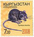 Stamp of Kyrgyzstan chychkan.jpg