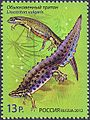 Stamp of Russia 2012 No 1600 Smooth Newt.jpg