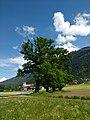 Stamser Eichenwald 01.jpg
