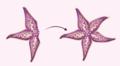 Starfish Unidirectional Regen.png
