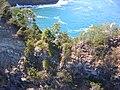 Starr-050307-4963-Schinus terebinthifolius-habitat-Keopuka-Maui (24372688469).jpg