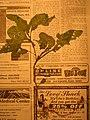 Starr-050427-0722-Solanum americanum-voucher 050405 43-Keopuka-Maui (24747280475).jpg
