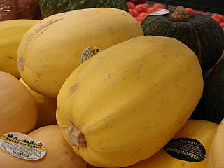 Spaghetti squash group of cultivars of squash