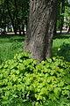 Staryi-park-15056619.jpg