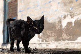 Superstition Belief or behavior that is considered irrational or supernatural