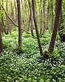 Stenshuvud National Park 03.jpg