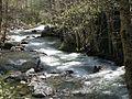 Steve's Fork Creek - panoramio.jpg