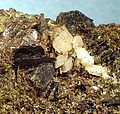 Stilpnomelane-Adularia-Epidote-139299.jpg