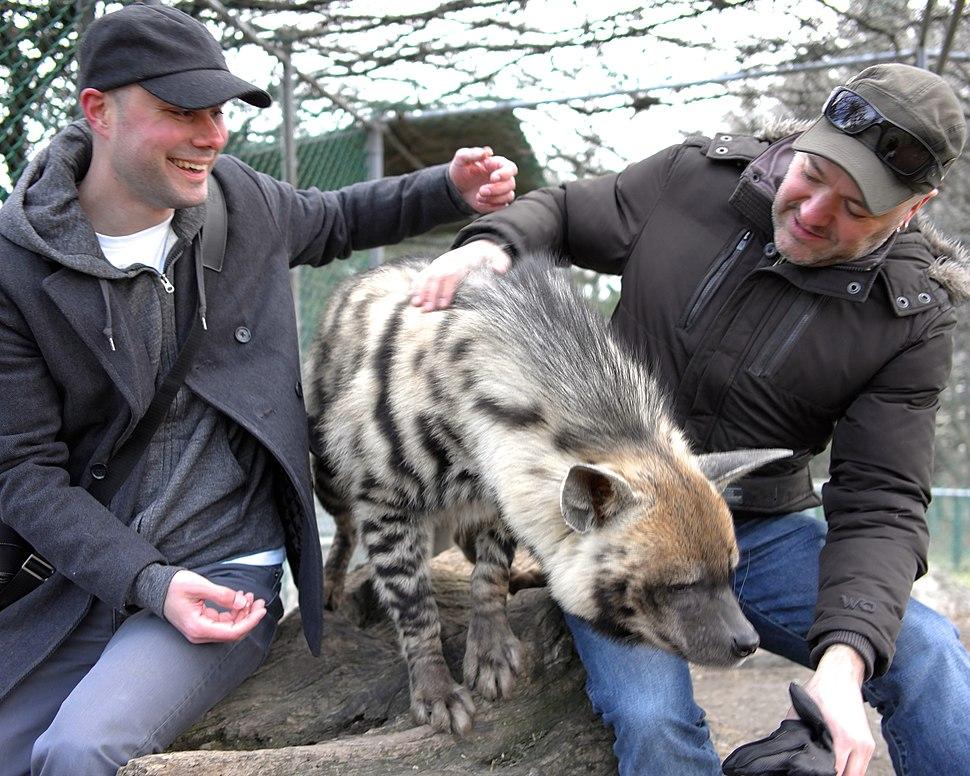 Striped hyena at Jungle Cat World 1