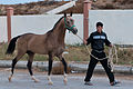 Studfarm in Turkmenistan - Flickr - Kerri-Jo (112).jpg