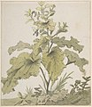 Study of a Plant MET DP803724.jpg