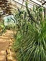 Succulents greenhouse 01.JPG