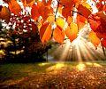 Sun rays on leaves.jpg