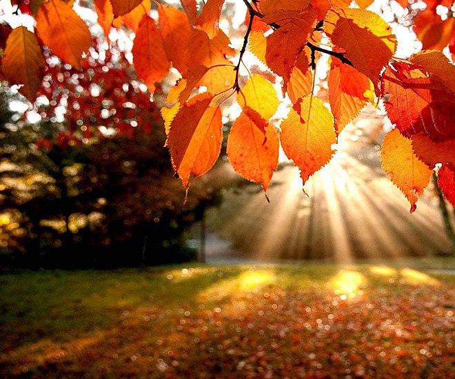 Обои Осень Скачать Бесплатно