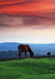 Horses - Wikiquote