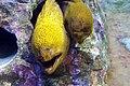 Sunshine international aquarium, Tokyo, Japan (281236328).jpg