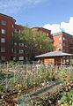 Suresnes - Jardins familiaux (5).JPG