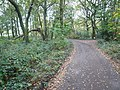 Sutton Spring Wood - Access Road - geograph.org.uk - 596792.jpg