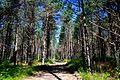 Svente Parish, LV-5473, Latvia - panoramio (7).jpg