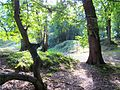 Swithland woods,Leicestershire.jpg