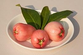 Syzygium fruit (2).jpg