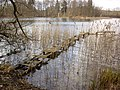 Szczuczarz-Lake-080303-641.jpg